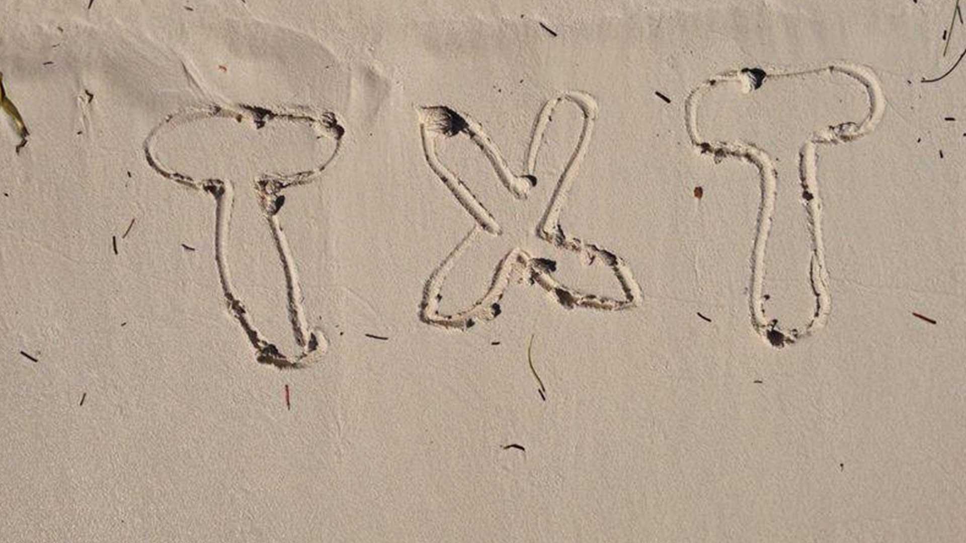 carrusel 2 TXT Agencia • El logo de todos, el logo del mundo